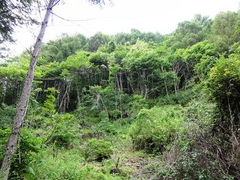 makiyama.jpg